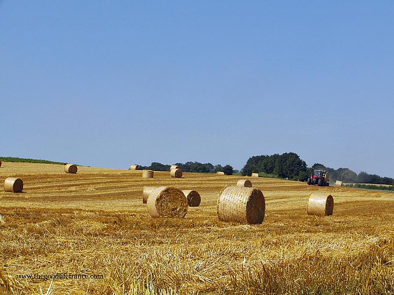 Wheat fields, Opal Coast, France
