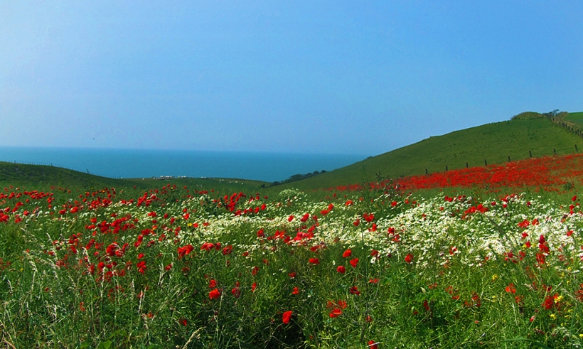 Opal Coast poppy fields looking out to Britain across the English Channel CC The Good Life France
