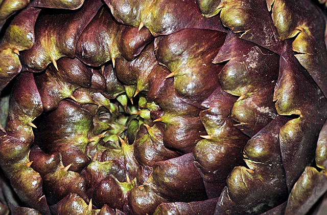 Guide to Paris, FriFotos, Artichoke