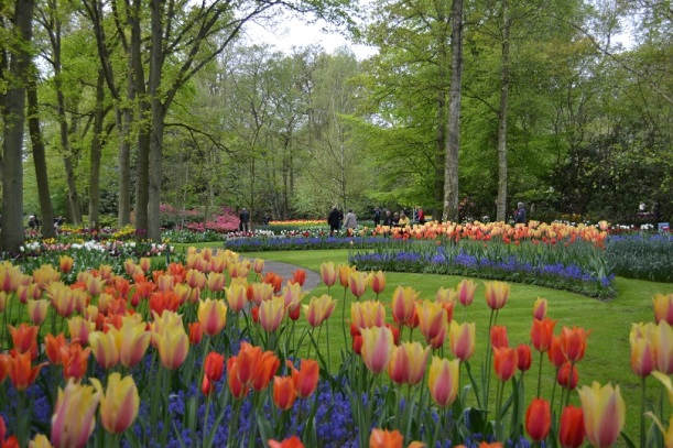 Amsterdam Tulip Festival - Great Escapes